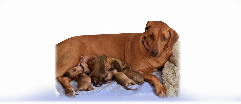 Máme štěňátka / We have puppies